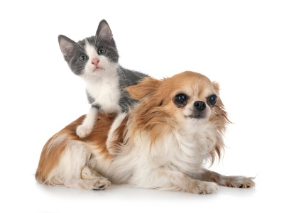 Pet friendly condo for rent Bangkok